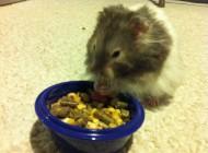 Esau the Hamster